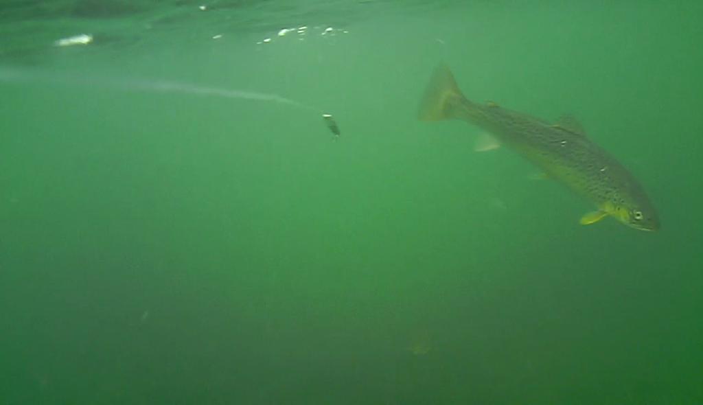 fiskeri-efter-havørreder-under-overfladen (12)
