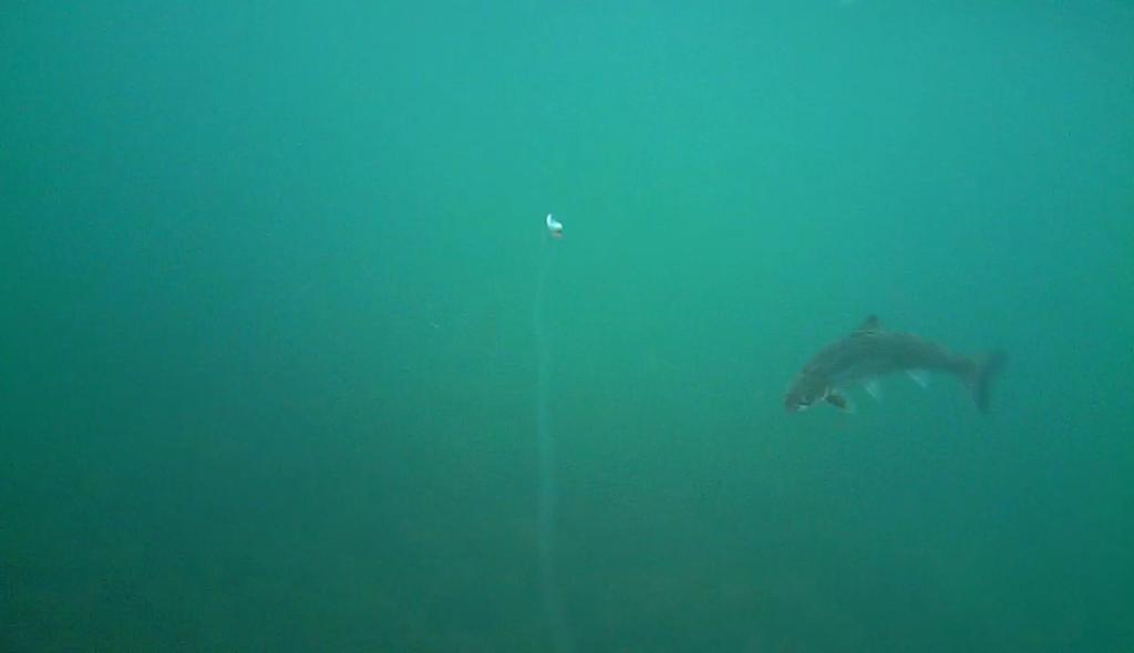 Havørred fiskeri med stripperen under overfladen