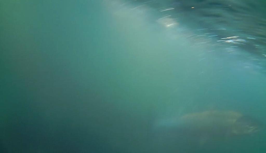 Havørred-fanget-på-Water-Wolf 5