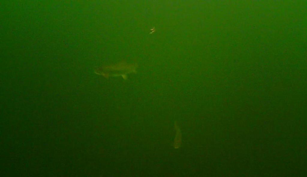 Mariager fjord 30. december