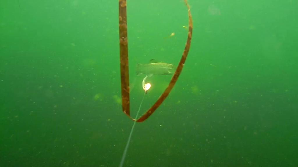 Fiskeri-under-overfladen-havørred-Lolland-25.-juli-07