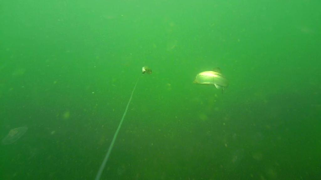 Fiskeri-under-overfladen-havørred-Lolland-25.-juli-forside1