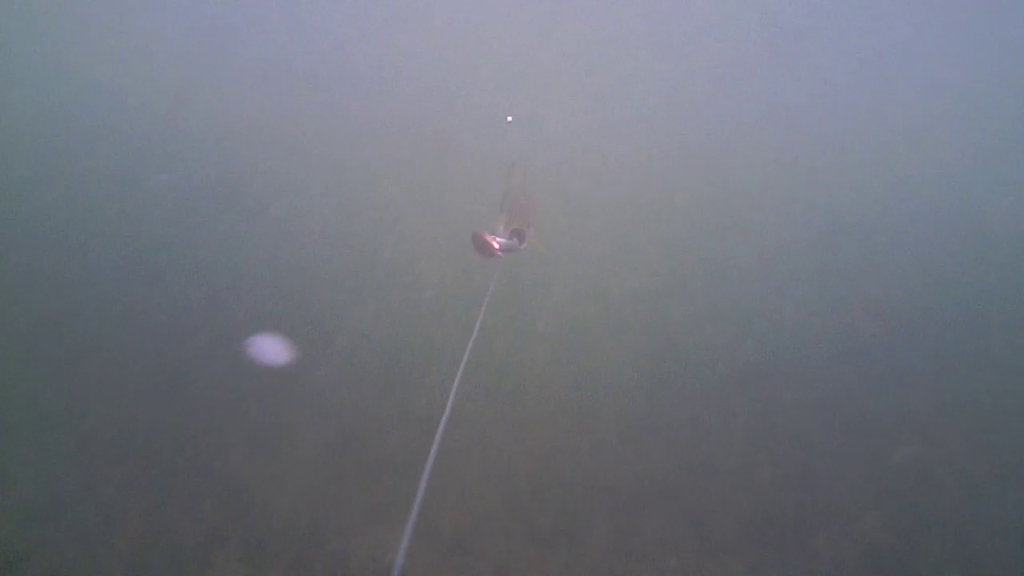 Fiskeri-under-overfladen-havørred-Lolland-28.-juli-03