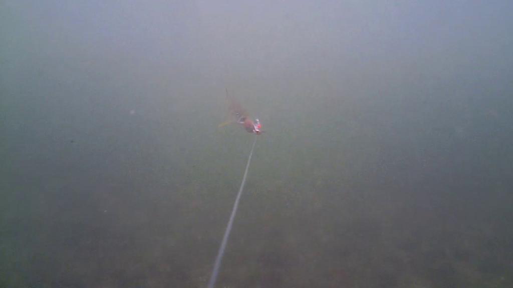 Fiskeri-under-overfladen-havørred-Lolland-28.-juli-04