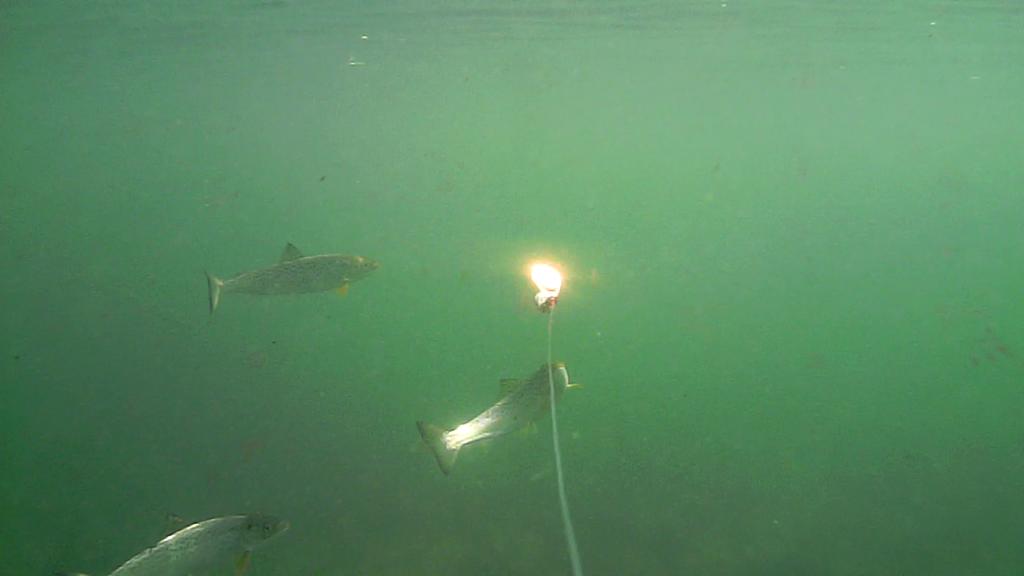 Fiskeri-under-overfladen-havørred-Lolland-28.-juli-07