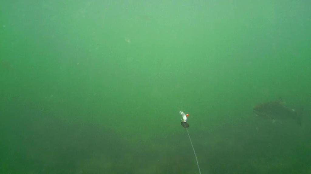 Fiskeri-under-overfladen-havørred-Lolland-28.-juli-08