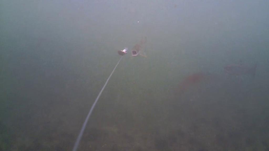 Fiskeri-under-overfladen-havørred-Lolland-28.-juli-forside1