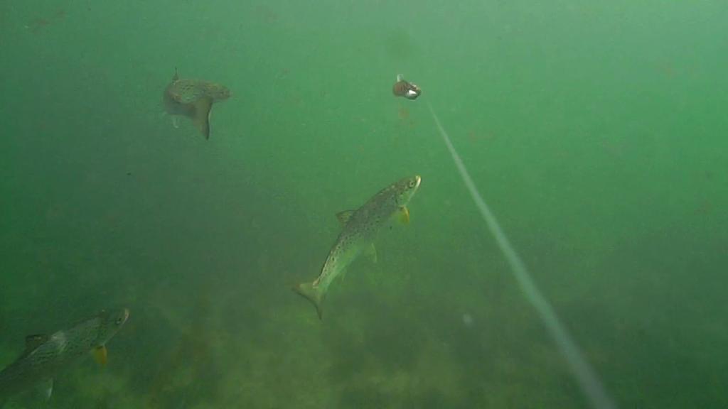 Fiskeri-under-overfladen-havørred-Lolland-28.-juli-forside2