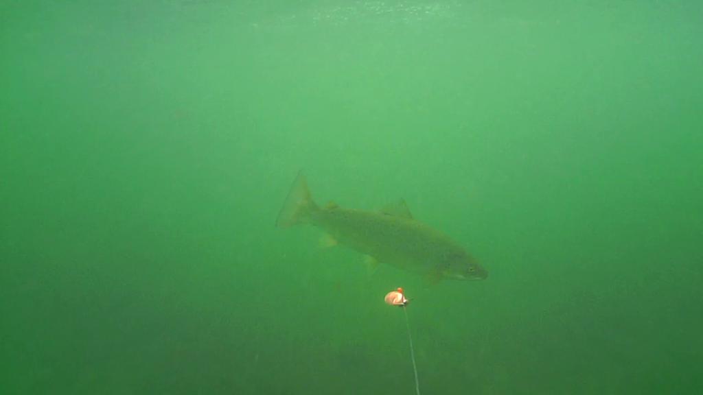Fiskeri-under-overfladen-havørred-Lolland-28.-juli-forside3