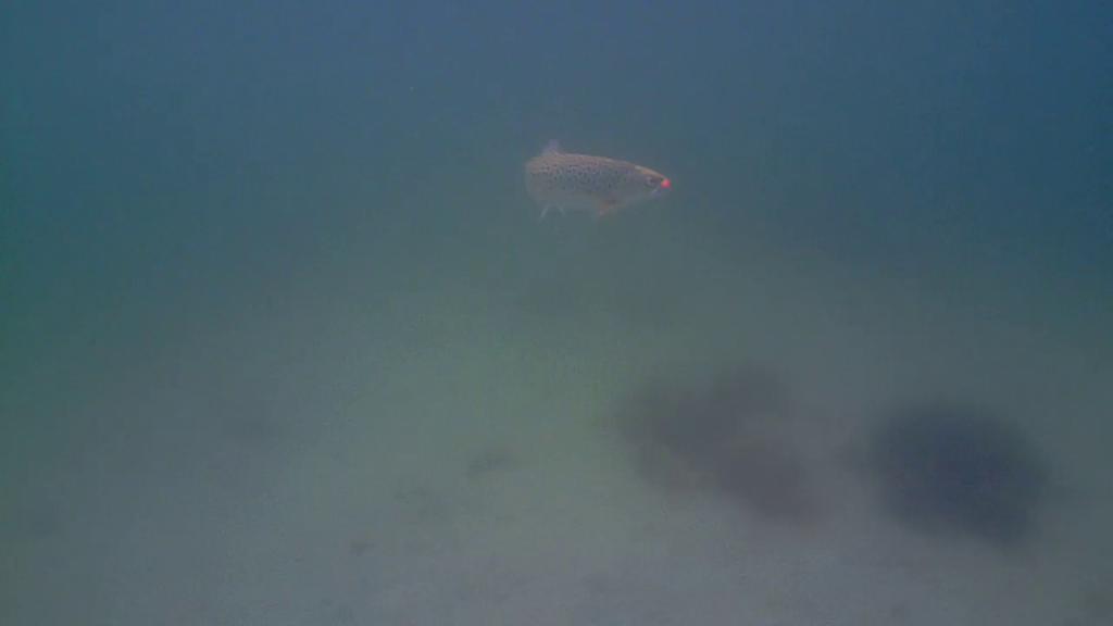 Havørredfiskeri-Water-Wolf-Mols-22.sep.2017-03