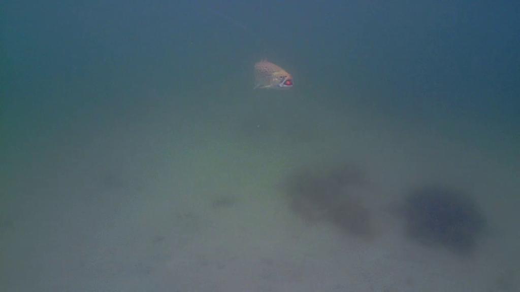 Havørredfiskeri-Water-Wolf-Mols-22.sep.2017-forside1
