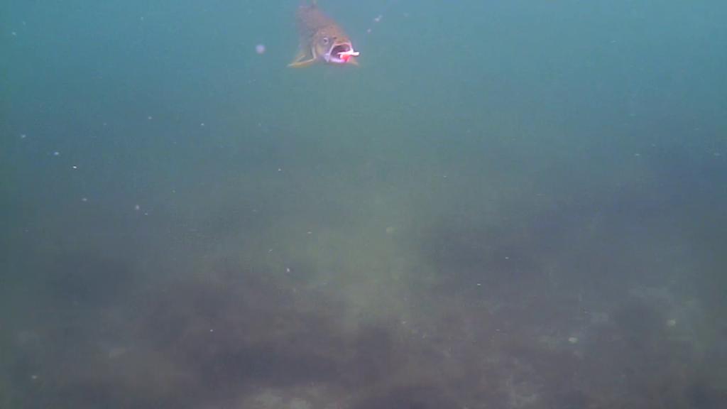 Havørredfiskeri-Water-Wolf-Mols-22.sep.2017(2)-04