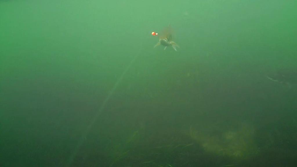Øst-Falster-Water-Wolf-16.oktober-2017-10
