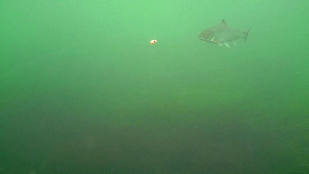 Øst-Falster-Water-Wolf-16.oktober-2017-21