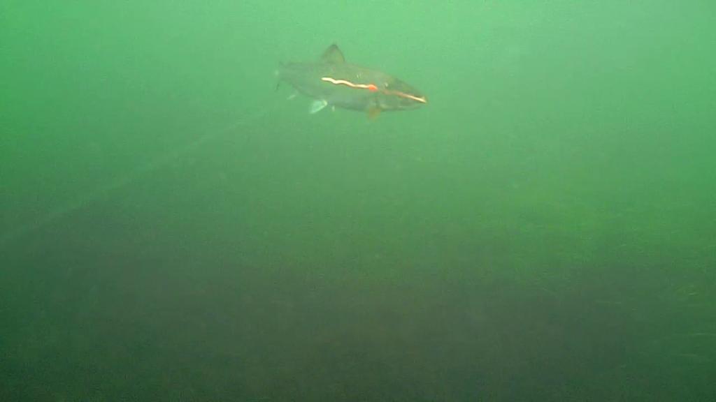 Øst-Falster-Water-Wolf-16.oktober-2017-28