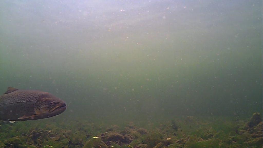 Mariager fjord 2. maj 2018 billede 1