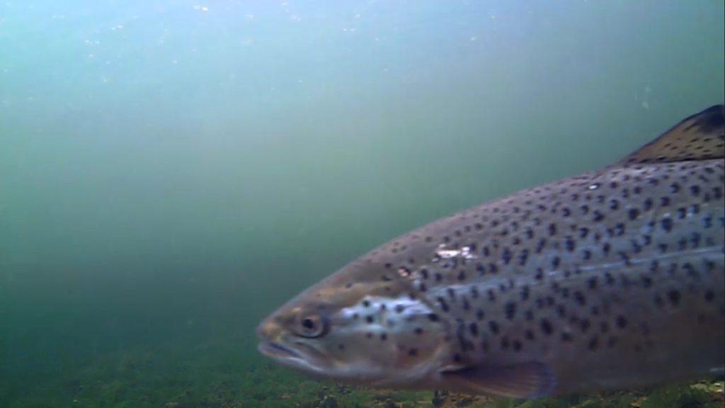 Mariager fjord 2. maj 2018 billede 2.2