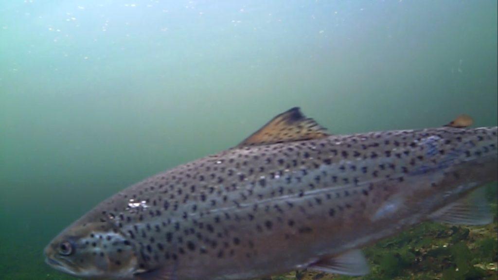 Mariager fjord 2. maj 2018 billede 2.4