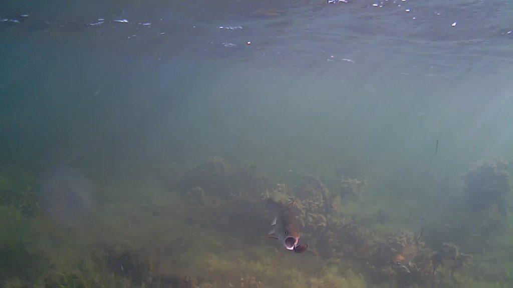 Havørreder-Lolland-Efterårsferien-2018-16