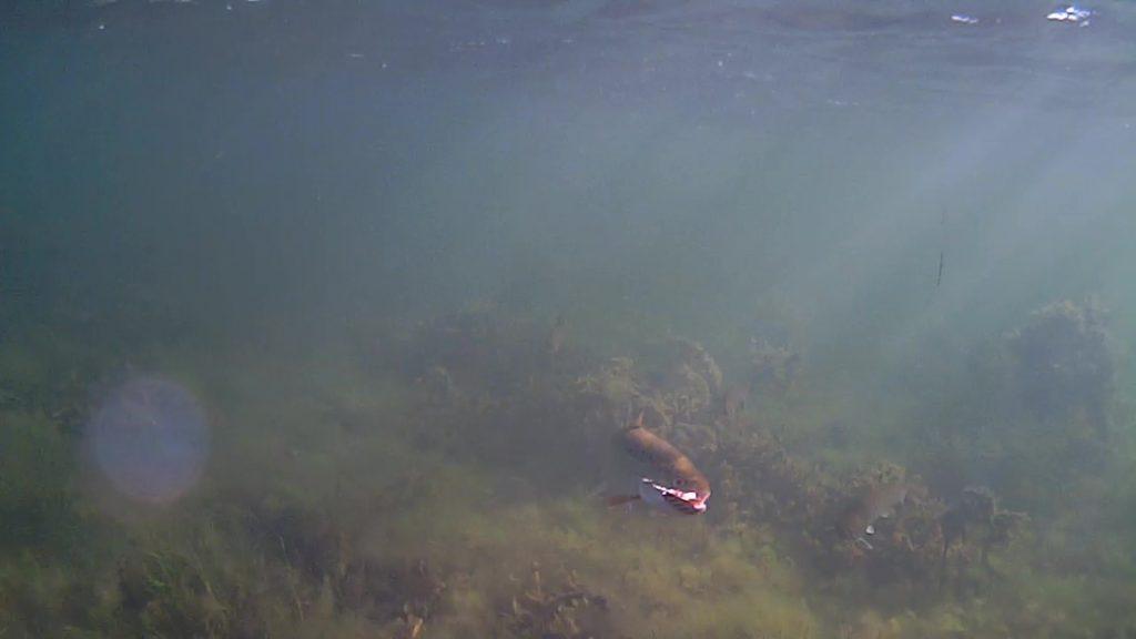 Havørreder-Lolland-Efterårsferien-2018-17